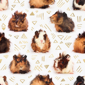 The Essential Guinea Pig