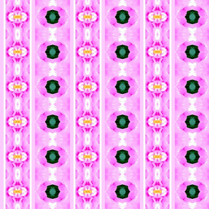 double_stripe_cropped_rose_Picnik_collage