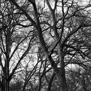 Tree Lace Original