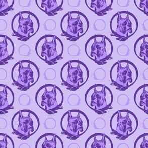 Collared Boxer portraits - purple
