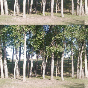 Breckenridge Park 4