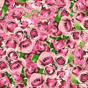 Abundant Roses - Ashes of Roses