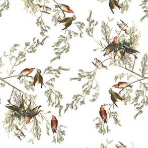 Audubon American Crossbill