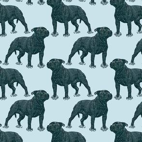 Posing Staffordshire Bull Terrier - blue