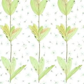 dappled willow mint