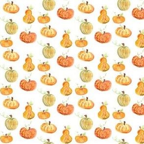 pumpkins and gordes mini