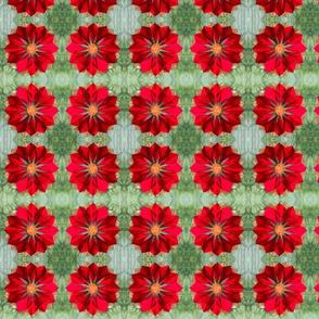 Poinsettia-ed