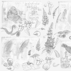 Botanical Sketches - grey
