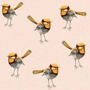 Golden Wrens on Peach