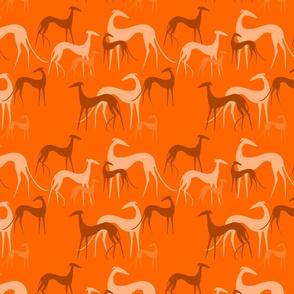sighthoounds orange