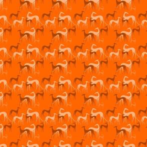 sighthounds orange small