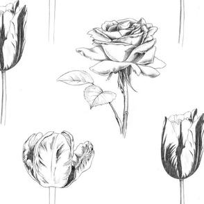 Sketchy Botanical