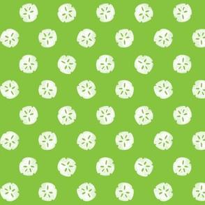 sand dollars - green