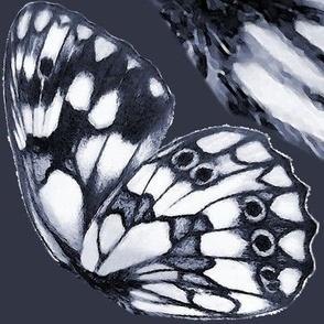 Marbled white (Melanargia galathea) butterfly wings
