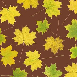 yellow maple leaves on mahogany
