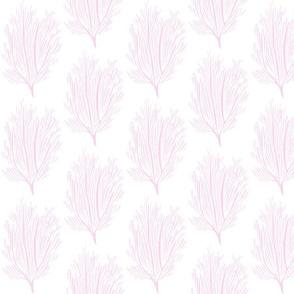 pink fan coral