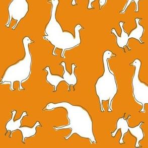 birds orange