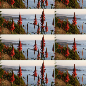 big_sur_hummingbird