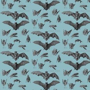 vintage bats 2 blue