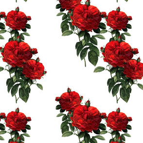 Redoute Roses ~ Riot of Red Jumble ~ Medium-ish