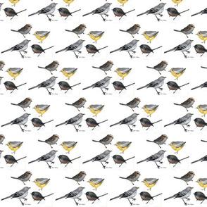 Bird Parade by Jane LaFazio