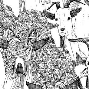 just goats black white