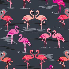 flamingos love graphite
