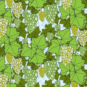 Fresh Green Grapes - Day
