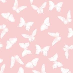 Butterflies for Sophy Girl