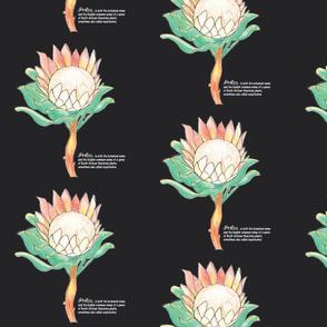 Protea-Sugarbush-Blk