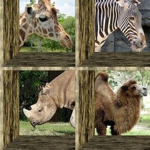 Attic Windows at the Zoo 1