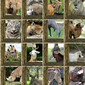 Attic Windows at the Zoo 2