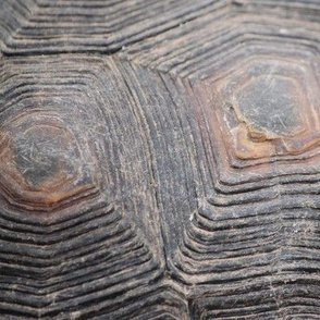 Tortoise Shell 12x8 Mirrored