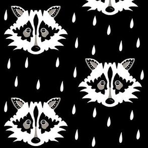 Raccoon black