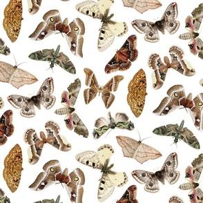 Moths on white