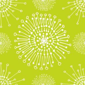 dandelions lime