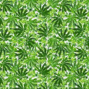 Go Green Ganja