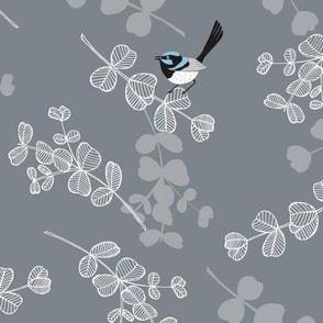 Blue Wrens - Grey