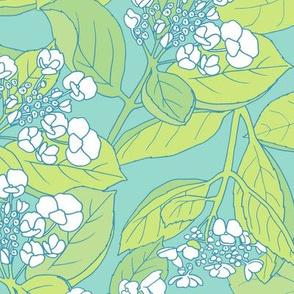 turquoise hydrangea