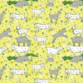 goats_repeat