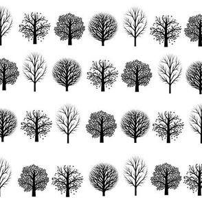 Black Trees, White Sky