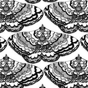Moth Lace Black on White