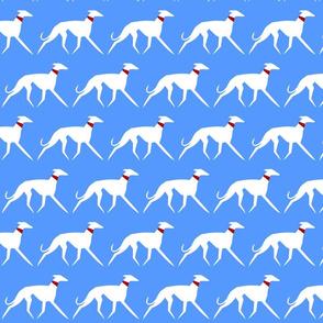 White sighthounds on blue