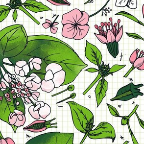 hortensia botanical study