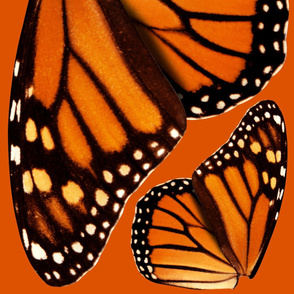 Oversized Monarch Wings for Cape