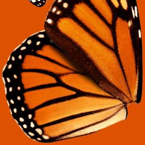 Medium Monarch
