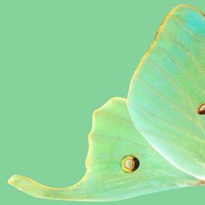 Medium Luna Moth Wings for Costume