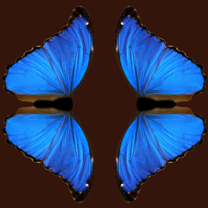 Blue Morpo Butterfly Medium One Piece