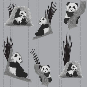 baby_pandas