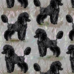 Black Poodle on Pastels 2